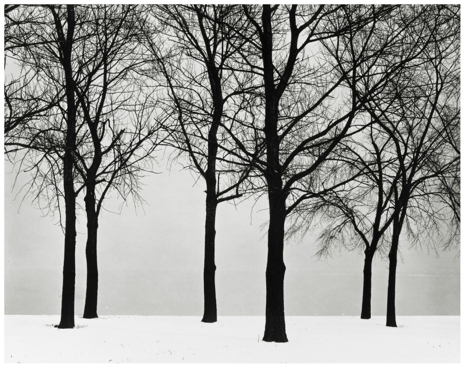 Chicago, Trees in Snow, 1950