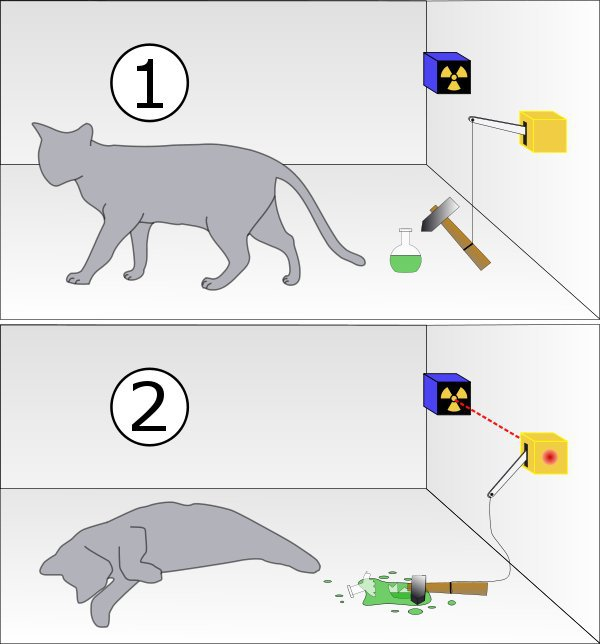 gato-schrodinger-abierta