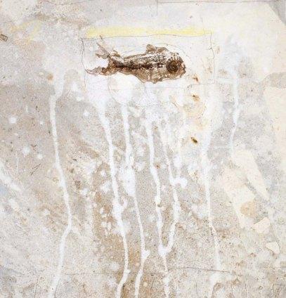 16. ''Фосил VI''. 2009г. 25 х 25 см.