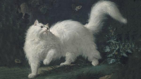 Historia de cómo el gato conquistó las cortes, los salones y el corazón  humano